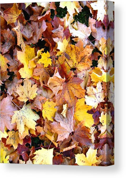 Leaves Canvas Print featuring the photograph Leaves Of Fall by Rhonda Barrett