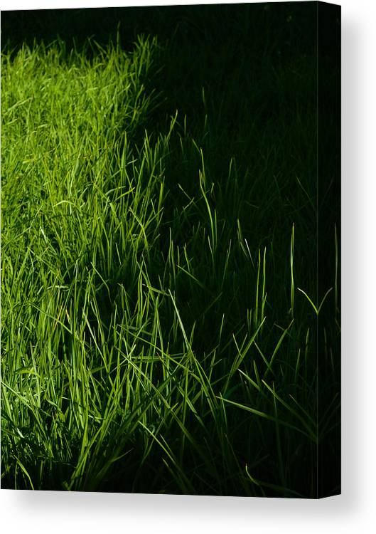 Grass Canvas Print featuring the photograph Light And Shade by Mark Blauhoefer