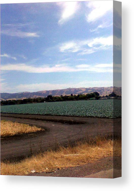 Canvas Print featuring the photograph ,m by Megan Vega