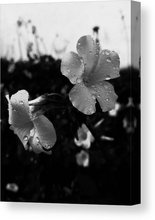 Flowers Canvas Print featuring the photograph Monography by Rui Militao