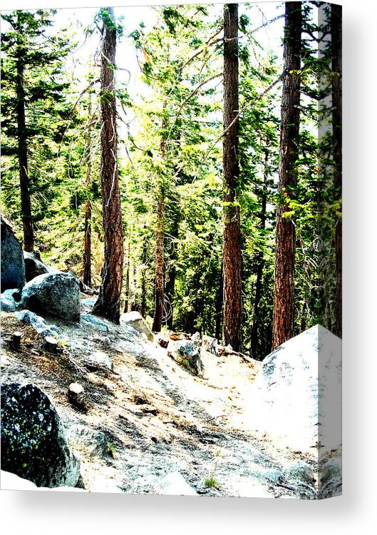 Trees Canvas Print featuring the painting Morning Breaks by Tim Tanis
