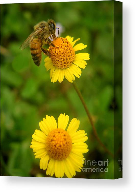 Nature Canvas Print featuring the photograph Nature In The Wild - Hanging In There by Lucyna A M Green