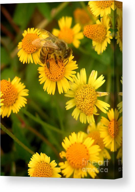 Nature Canvas Print featuring the photograph Nature In The Wild - The Nectar Company by Lucyna A M Green