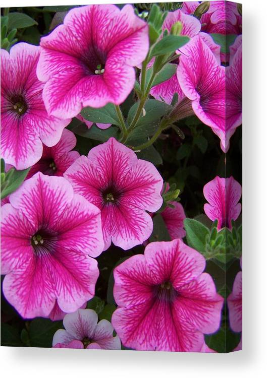 Pink Flower Canvas Print featuring the photograph Pink Petunia by Gene Ritchhart