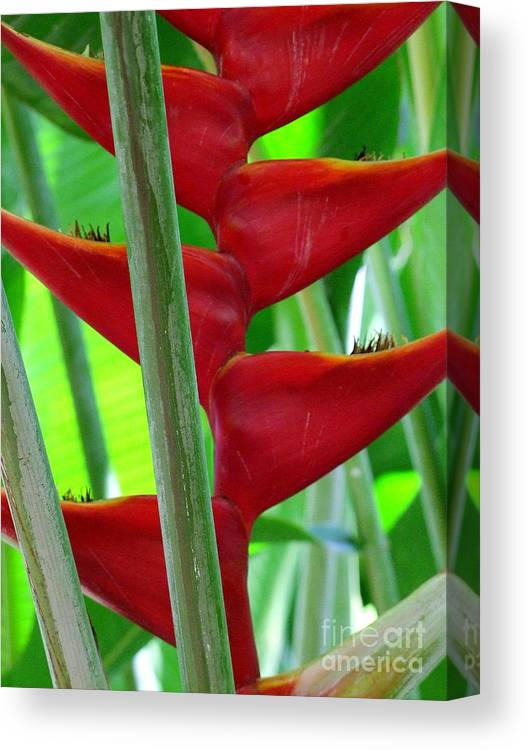 Red Flowers Canvas Print featuring the photograph Red Heliconia by Mary Deal
