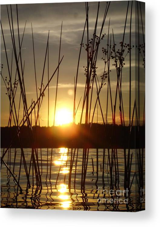 Landscape Canvas Print featuring the photograph Reeds In A Lake by Chad Natti
