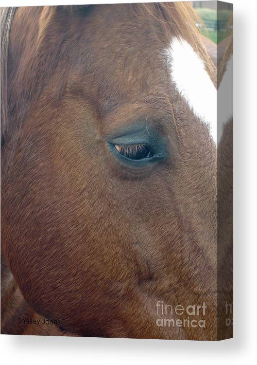 Horse Canvas Print featuring the photograph Sad Eyed by Shelley Jones