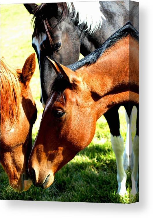Horses Canvas Print featuring the photograph Sally And Friends by Susie Fisher