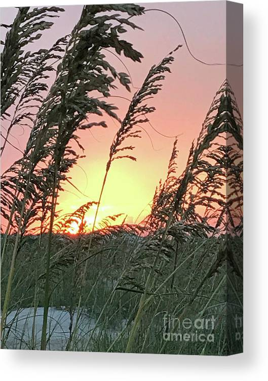 Sea Canvas Print featuring the photograph Sea Oats At Sunset by Nancy Worrell
