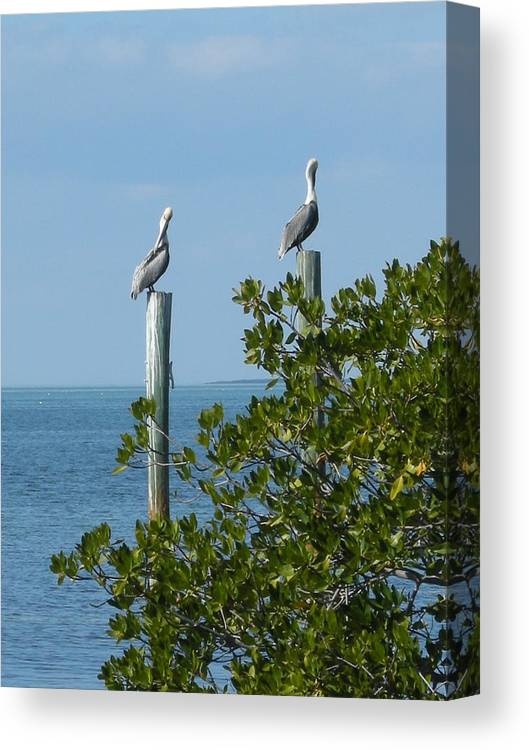 Birds Canvas Print featuring the photograph Seagull by Audrey Venute