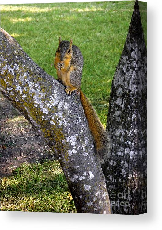 Nature Canvas Print featuring the photograph Snack Time by Lucyna A M Green