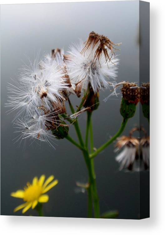 Autumn Canvas Print featuring the photograph Summer Is Over... by Valia Bradshaw