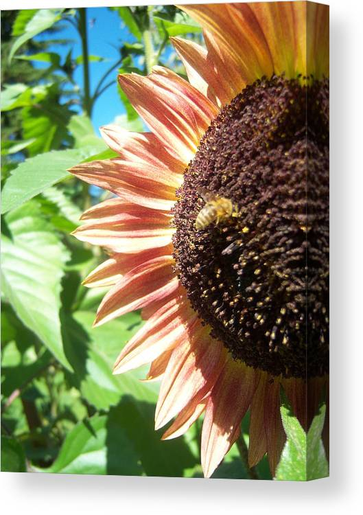 Sun Canvas Print featuring the photograph Sunflower 112 by Ken Day