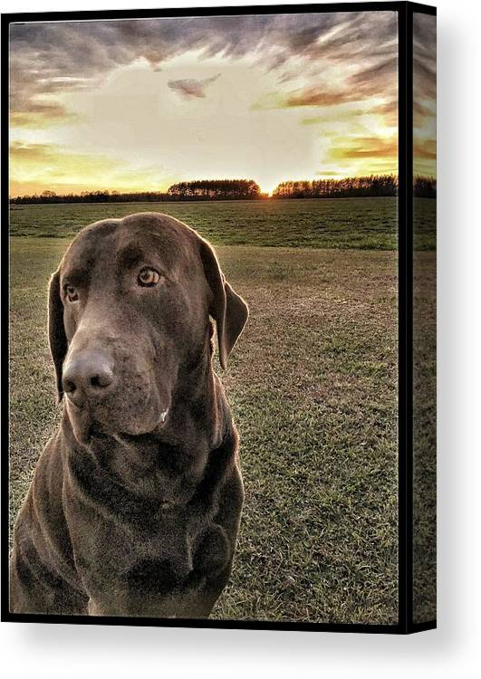 Canvas Print featuring the photograph Sunset With My Good Boy Brownie by Pamela Long