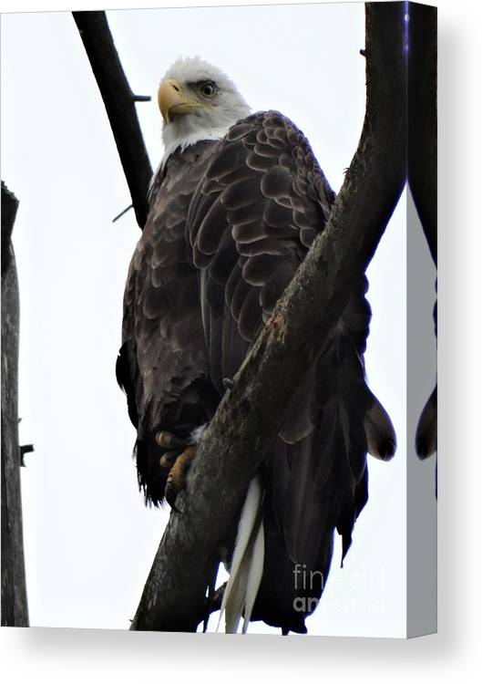 Bald Eagle Lake St Catherine Wells Poultney Vermont Canvas Print featuring the photograph The Sky Is Falling by Karen Velsor