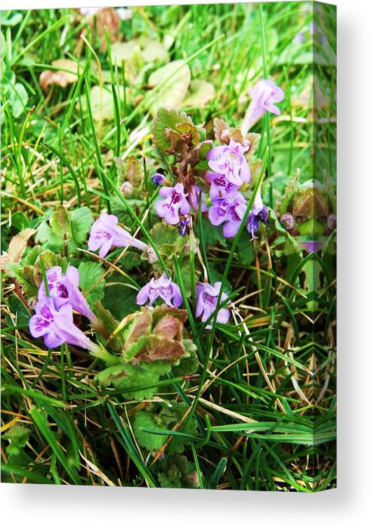 Purple Canvas Print featuring the photograph Tiny Flowers II by Anna Villarreal Garbis