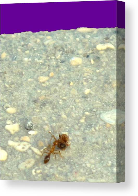Ant Canvas Print featuring the photograph To The Edge by Ian MacDonald