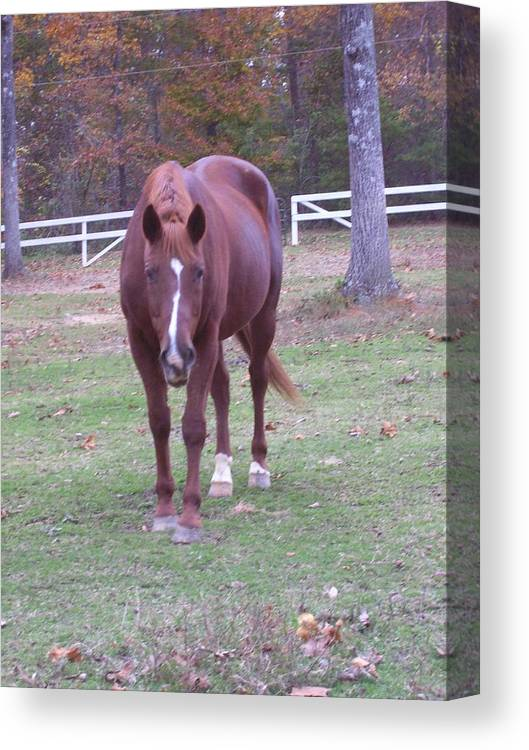 Horse Canvas Print featuring the photograph Whiskey by Kristen Hurley