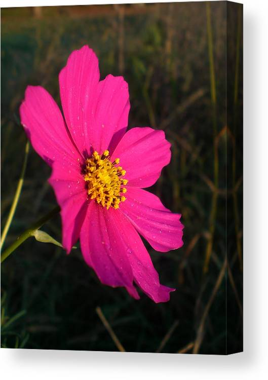 Flower Canvas Print featuring the photograph Wildflower Greeting The Day by Wendy Robertson
