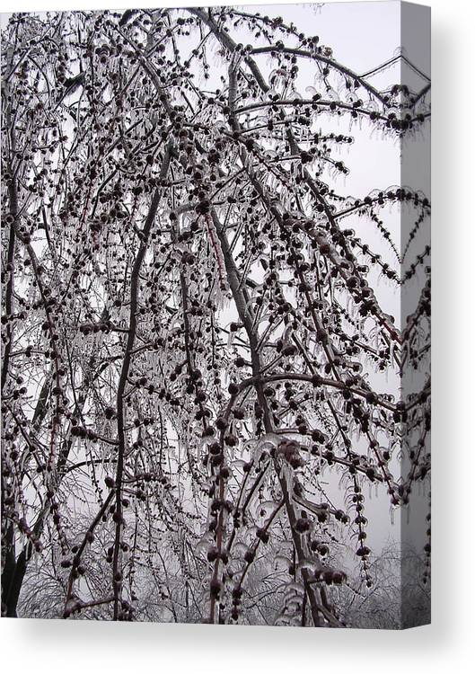 Nature Canvas Print featuring the photograph Winter Beauty by Audrey Venute