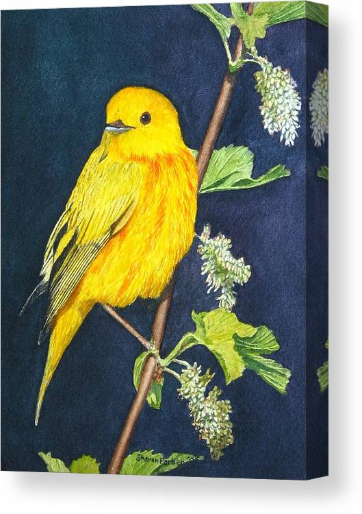 Bird Canvas Print featuring the painting Yelllow Warbler by Sharon Farber