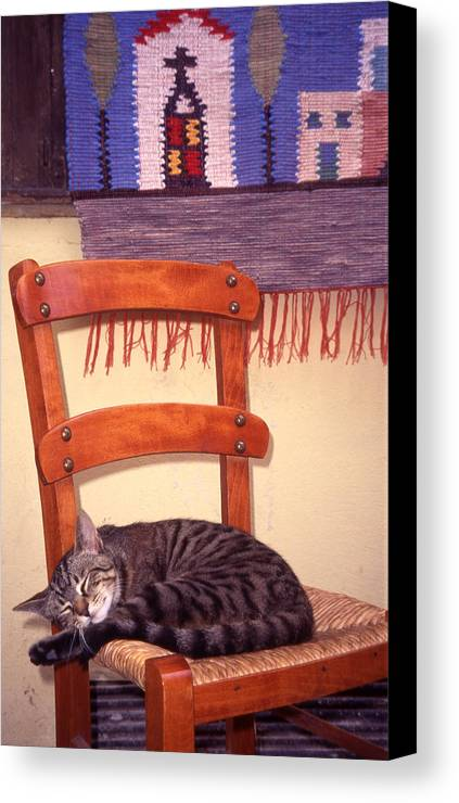 Cat Canvas Print featuring the photograph Cat Nap by Steve Outram