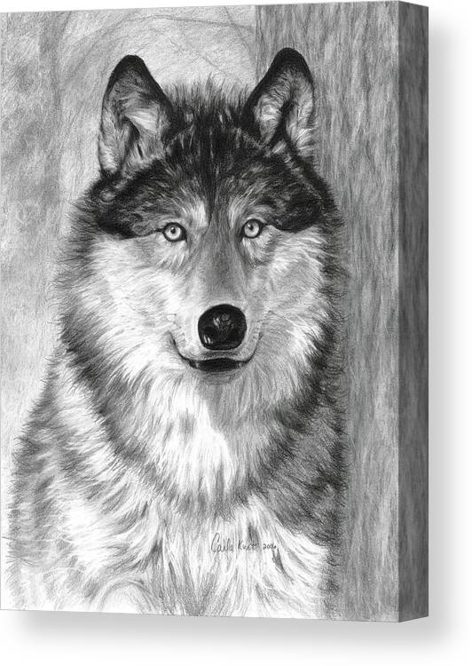 Wolf Canvas Print featuring the drawing Alpha by Carla Kurt