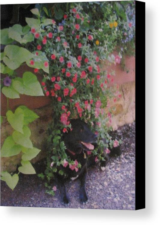 Dog Canvas Print featuring the photograph Dog In Bloom by Belinda Consten