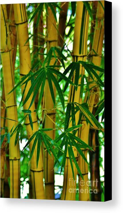 Hawaiian Bamboo Canvas Print featuring the photograph Bamboo Of Hawaii by Craig Wood
