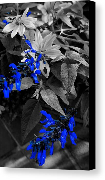 Blue Canvas Print featuring the photograph Blue Drippings by Tim G Ross