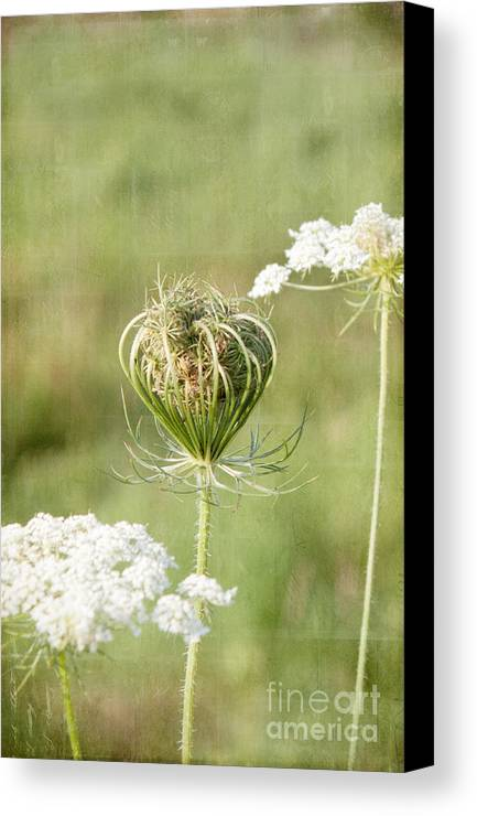Field Canvas Print featuring the photograph Holding On To Everything by K Hines
