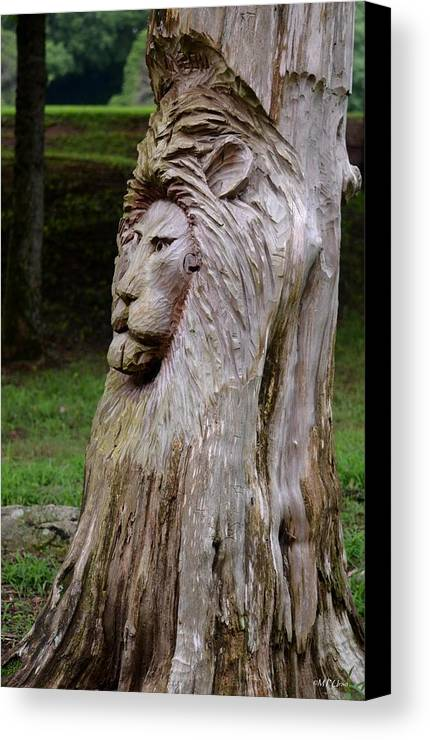 Lion Tree Canvas Print featuring the photograph Lion Tree by Maria Urso