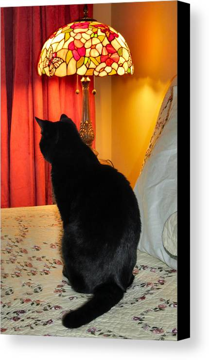 Cat Canvas Print featuring the photograph Witches Cat by Art Dingo
