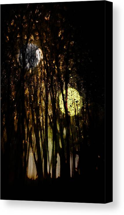 Digital Photography Canvas Print featuring the photograph Evon 3 by Tony Wood