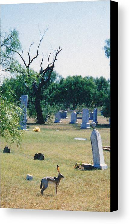 Rabbit Cementery Tombstones Canvas Print featuring the photograph Jack Rabbit In Cementery by Cindy New