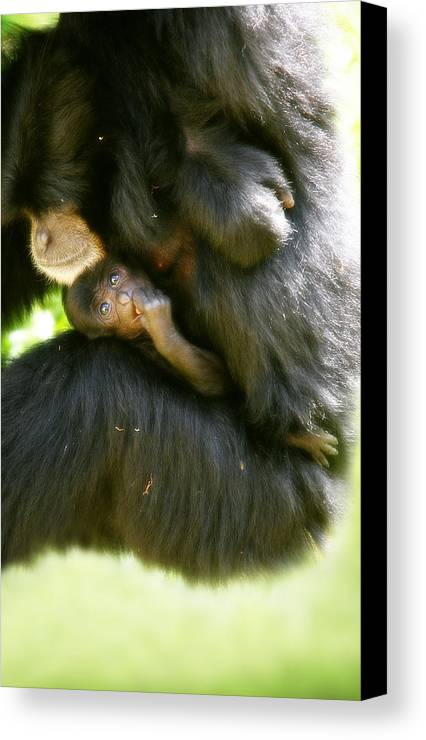 Monkey Canvas Print featuring the photograph Mother And Baby Monkey by Lesley Smitheringale