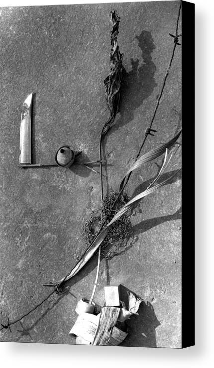 Still Life Canvas Print featuring the photograph Still Forms by Ted M Tubbs