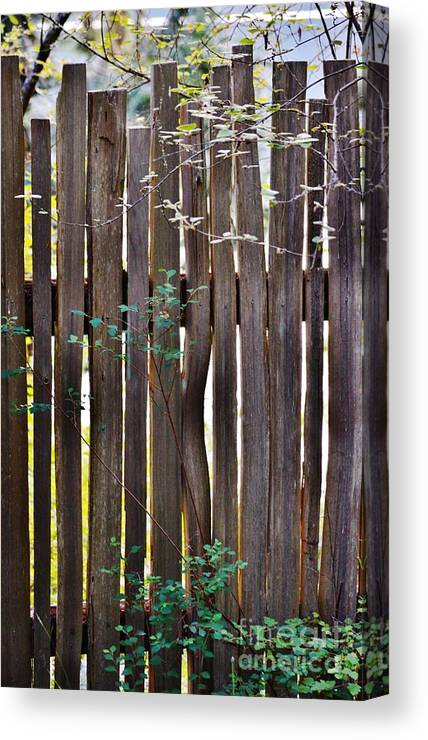 Wood Canvas Print featuring the photograph Untitled by Laurie Runyan