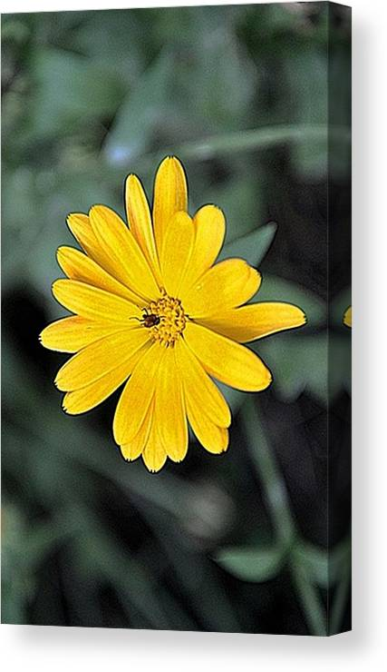 Flower Canvas Print featuring the photograph Flower by Luiza W
