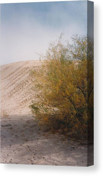 Sands Sand Footprints Bush Canvas Print featuring the photograph Sands Of Monahans by Cindy New