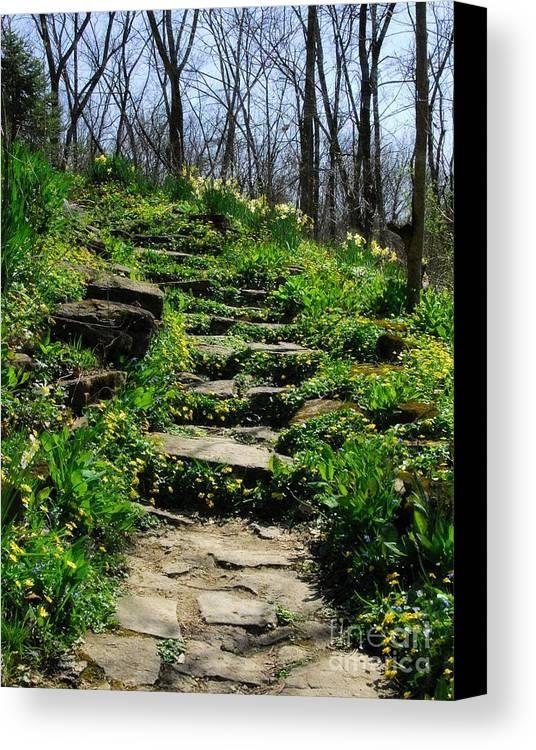 Landscapes Canvas Print featuring the photograph Spring In Your Step by Mel Steinhauer