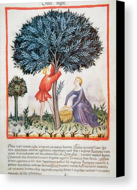 14th Canvas Print featuring the photograph Tacuinum Sanitatis, Medieval Health by Prisma Archivo