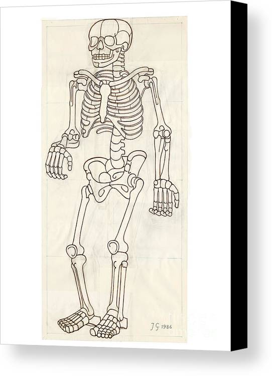 Anatomy Canvas Print featuring the drawing Anatomy Scrolls - Front by Johannes VON GUMPPENBERG