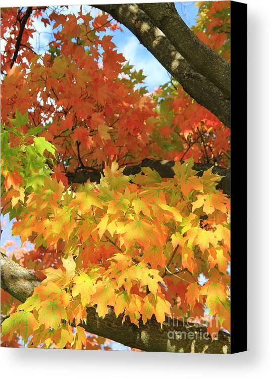 Fall Canvas Print featuring the photograph Autumn Extravaganza by Carol Komassa