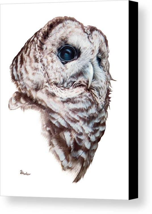 Barred Owl Canvas Print featuring the drawing Barred Owl by Brent Ander