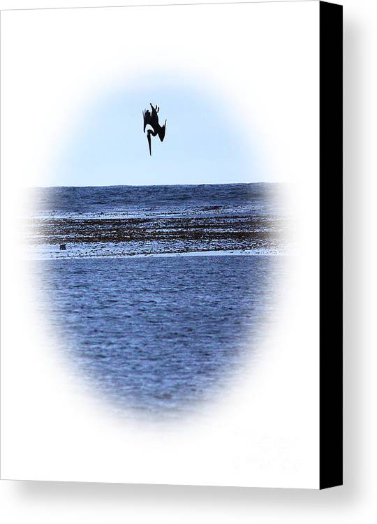 Bird Canvas Print featuring the photograph Diving Pelican by Steven Baier