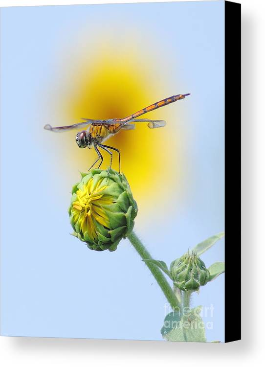 Nature Canvas Print featuring the photograph Dragonfly In Sunflowers by Robert Frederick