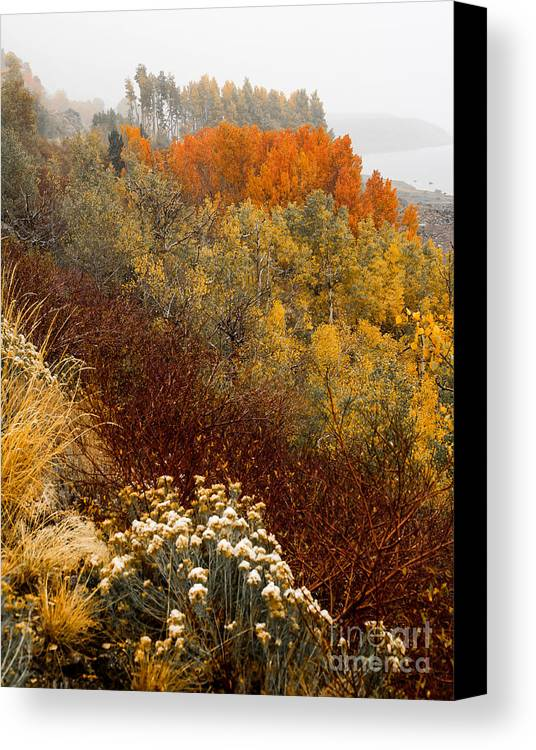 Lundy Lake Canvas Print featuring the photograph Fall Colors On June Lake Loop by Webb Canepa