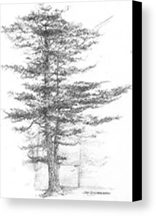maine eastern white pine canvas print canvas art by jim hubbard