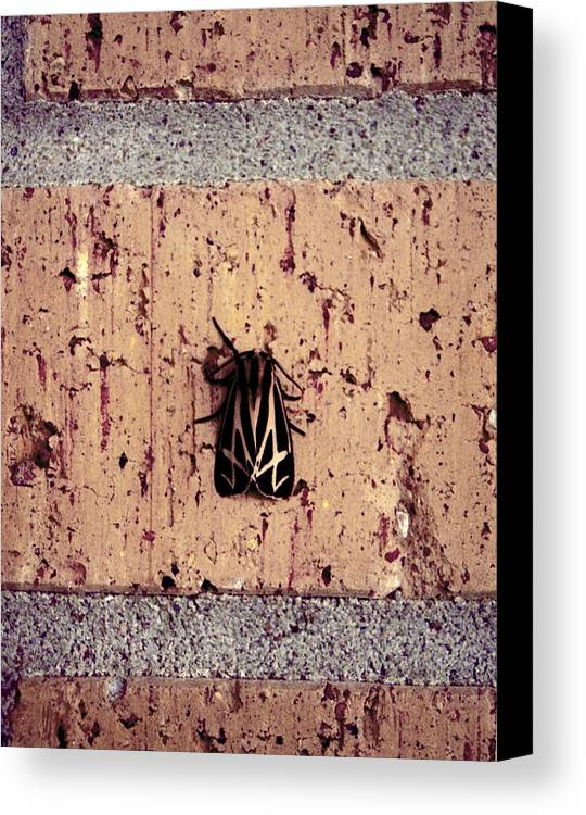 Moth Canvas Print featuring the photograph Moth On Brick by Jessica Wakefield